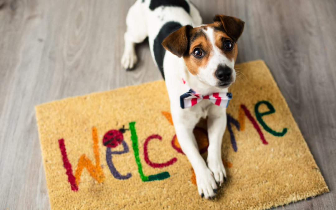 Tips For Selling Your Home With Pets